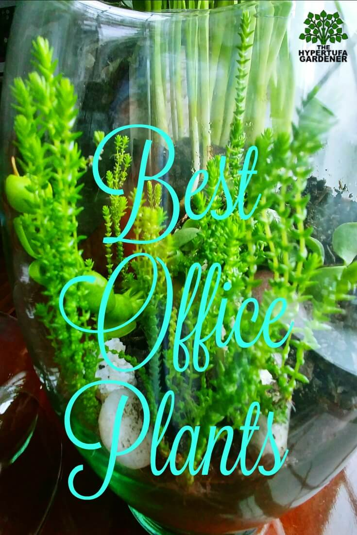 Best Office Plants - Of course it would be succulents!