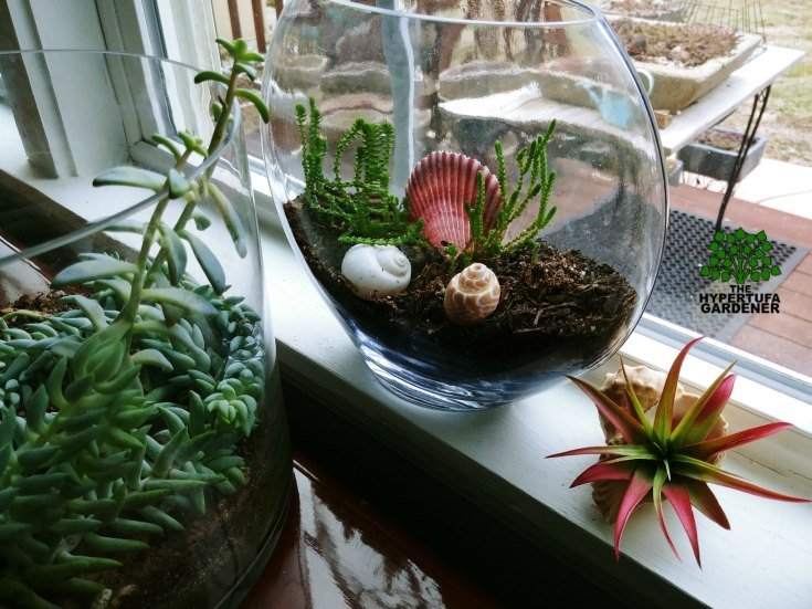 More terrariums - Moving potted plants like this is easy