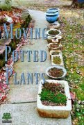 Moving potted plants - Hypertufa pots