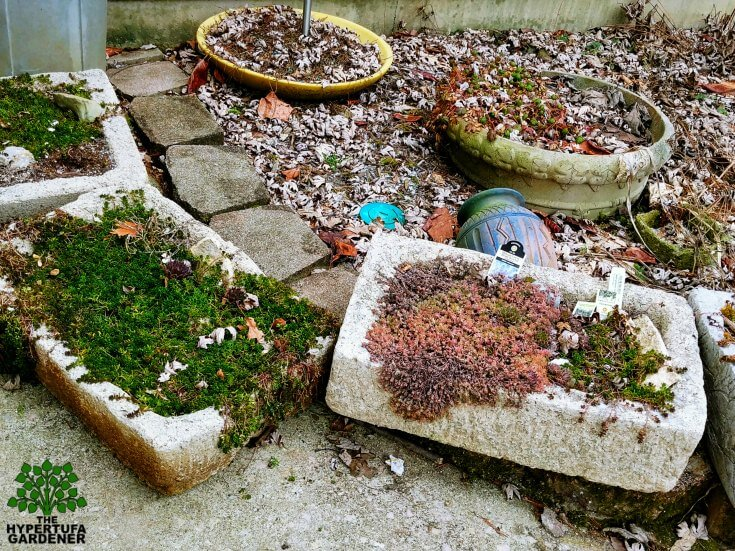 Moving potted plants - These are large ones made from hypertufa