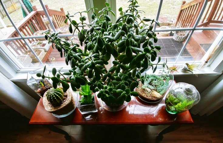 New Potted plants to move