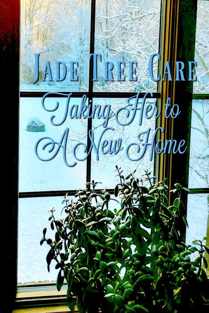 Jade Tree Care - Moving Her to her New Home