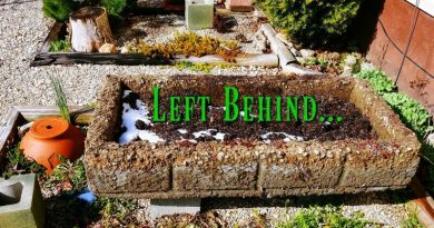 Left Behind – My Big Hypertufa Isn't Mine Anymore!
