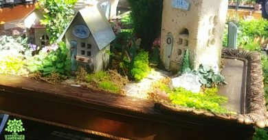 Fairy Garden Pictures and Ideas