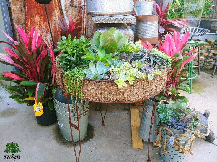 Large waist-high table succulent arrangement