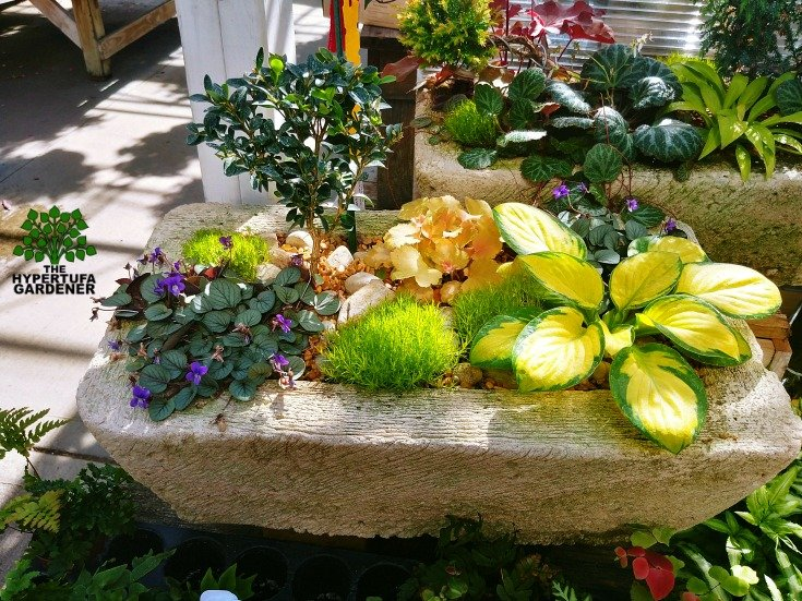 More than just succulent arrangements. Use all kinds of smaller plants.