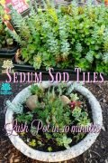 Sedum Sod Tiles - Have a Lush planted pot in 10 minutes