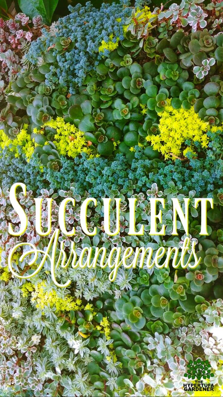 Succulent Arrangements - So Many Ideas
