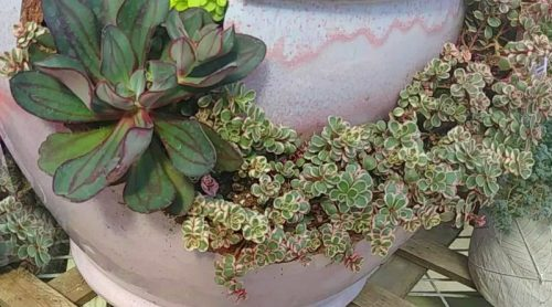 Succulent Arrangements – Such Inspirations!