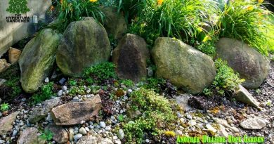 Another hillside rock garden
