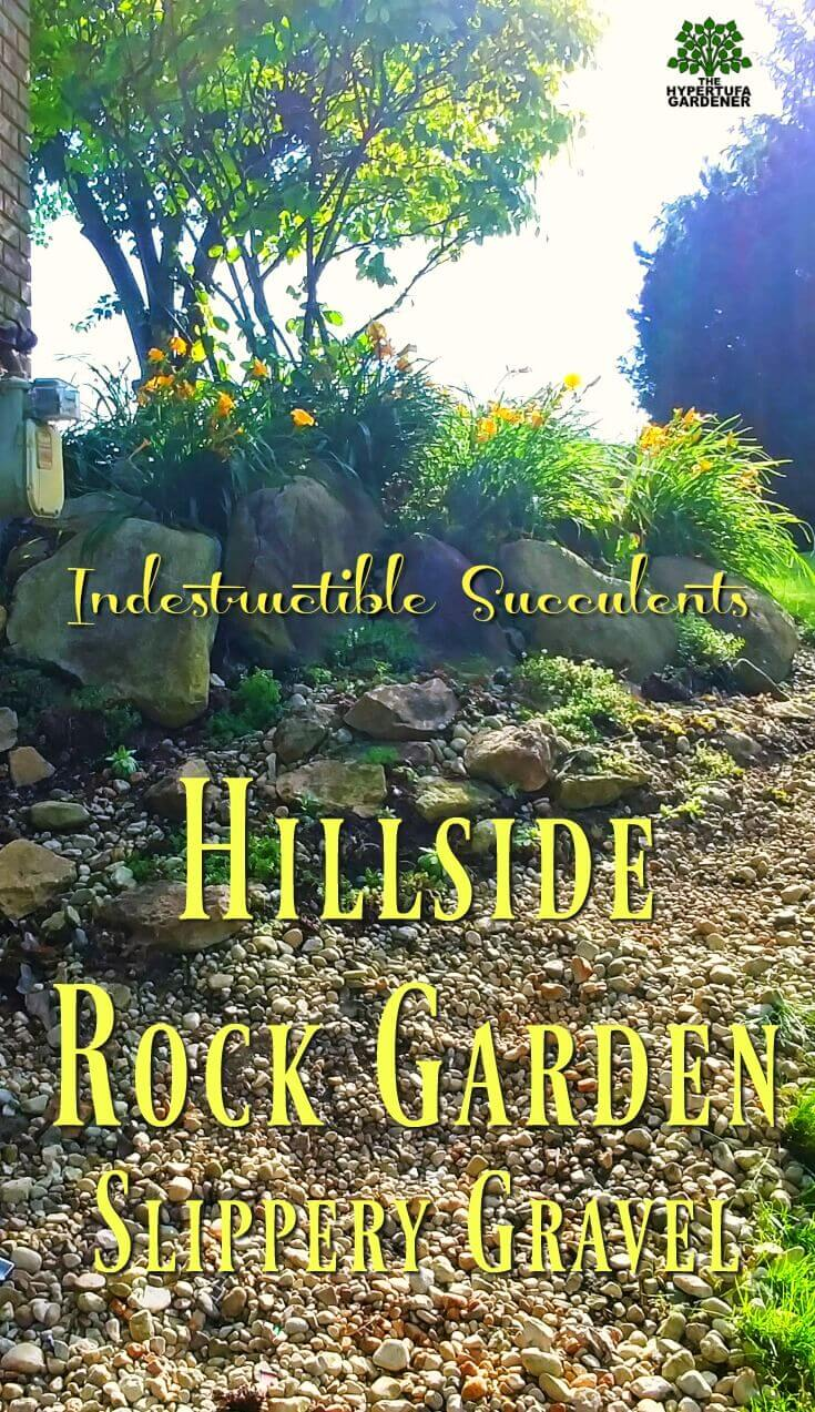 Hillside Rock Garden - my indestructilbe succulents