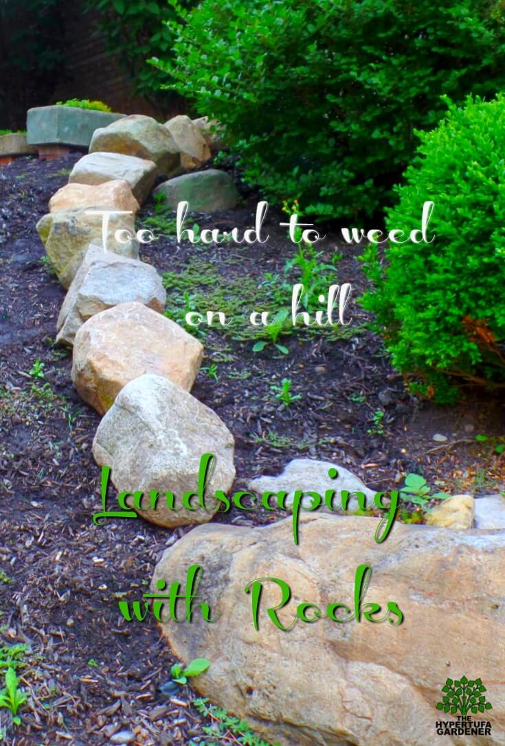 Too hard to weed on a hill so we are landscaping with rocks and boulders