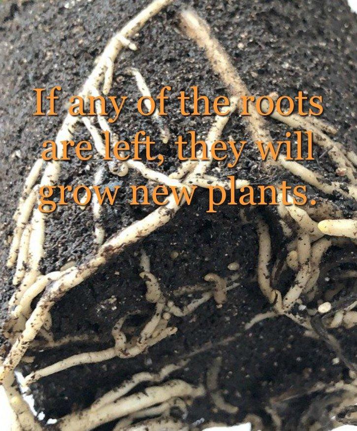 image of roots hiding underground