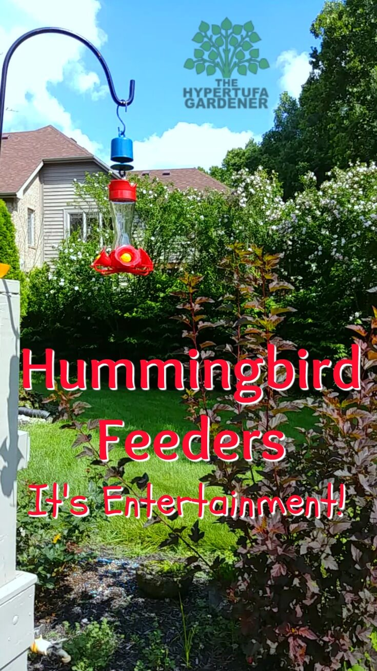 Hummingbird feeders can be so entertaining - even educational for your kids!