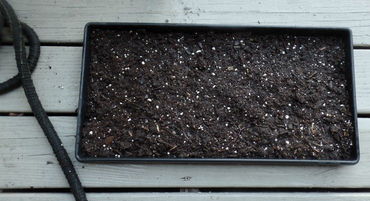 image of a shallow tray of soil for sprouting succulents