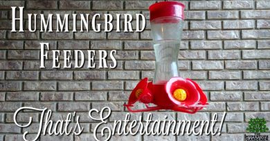 That's entertainment - Hummingbird Feeders