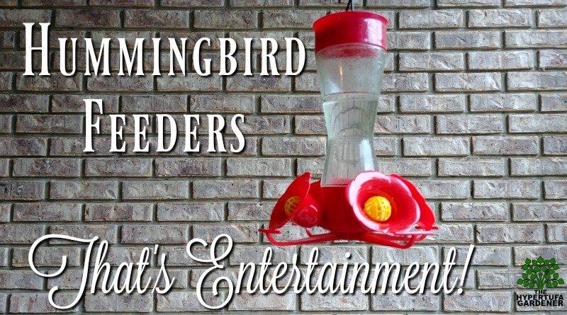 That's entertainment - Hummingbird Feeders