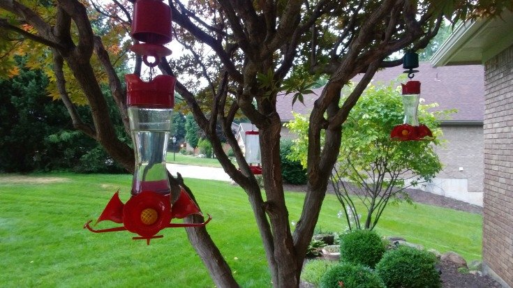 Three Hummingbird feeders, enough for all but they still fight over them.