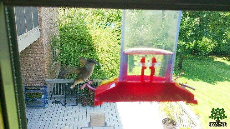 What do I think about window hummingbird feeders