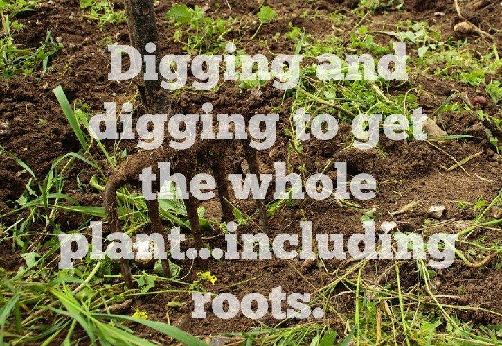 image of pitchfork digging flower bed