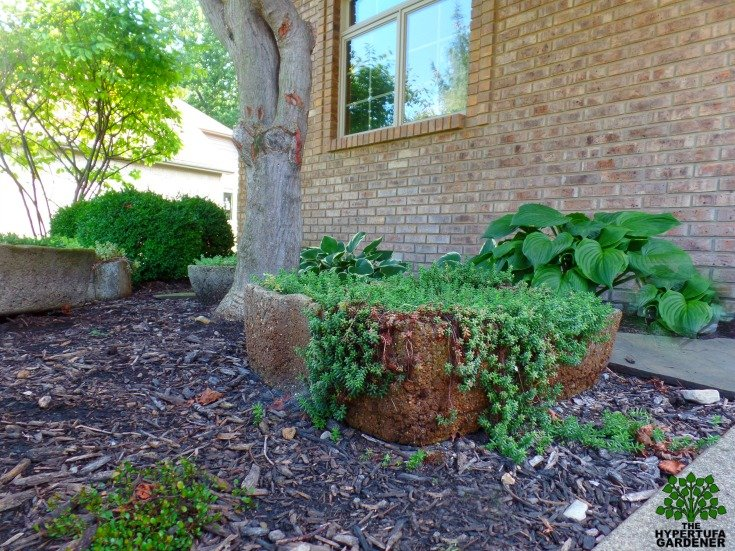 Overflowing hypertufa in my small garden design