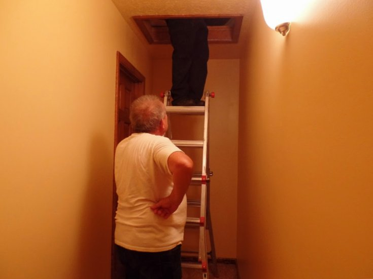 Checking for yellow jacket nest in attic