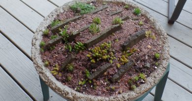 How To Build A Crevice Garden – In A Hypertufa Bowl