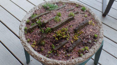 How To Build A Crevice Garden – In A Hypertufa Bowl