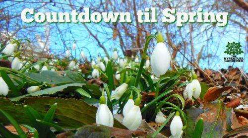 Growing Bulbs In Hypertufa Pots – Spring Planning