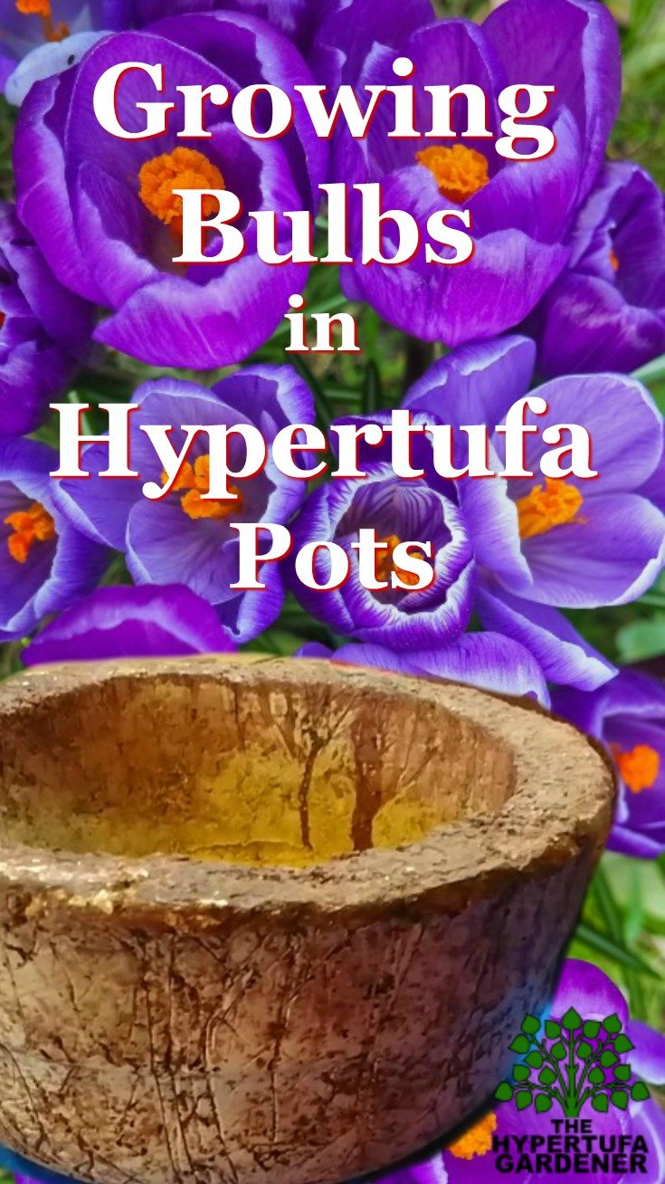 I'm Growing bulbs in hypertufa pots -crocus in spring