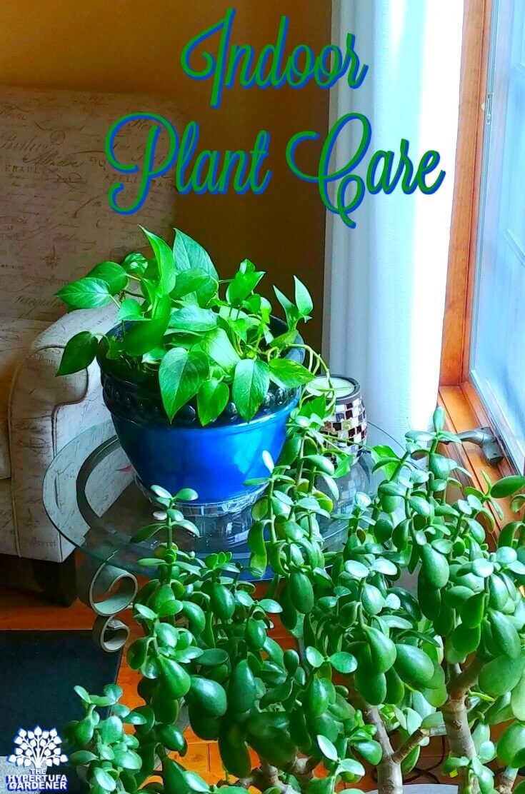 Image of Jade Plant and Golden Pothos
