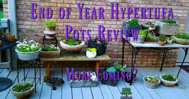 End of Year Hypertufa Pots Rewind/Review