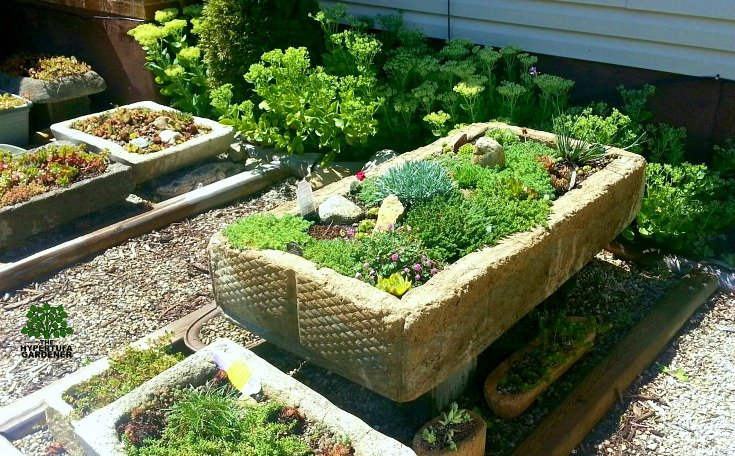 My huge hypertufa planter trough which we left when we sold the house.