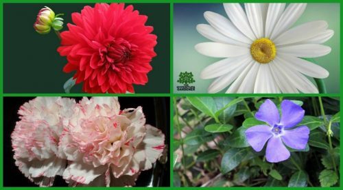 10 Flower Meanings & What They Symbolize