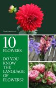 images of various flower bouquets