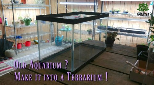 This Old Aquarium Now Is A Big Terrarium!