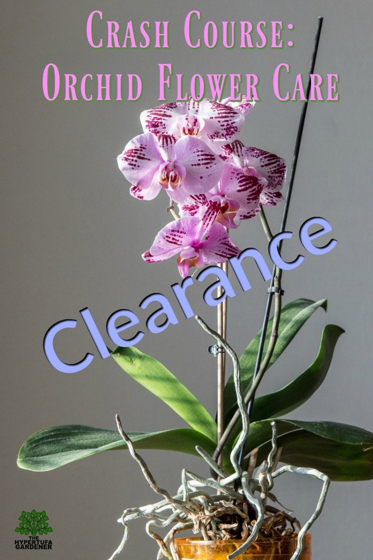 Crash course - Orchid flower care - I bought my first one on clearance