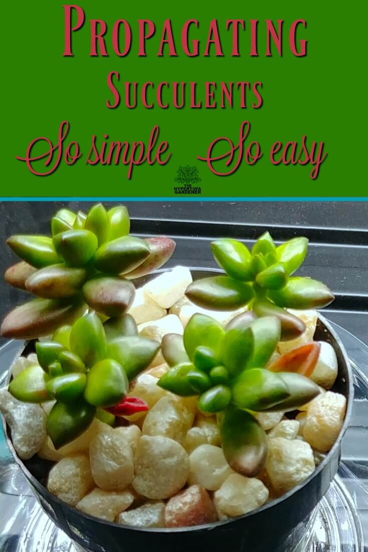 It is so simple and so easy - Propagating succulents make sense.