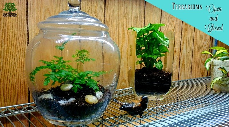 Making terrariums - Both open and closed