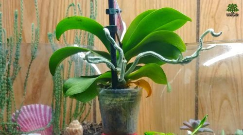 Orchid Flower Care – I Rescued An Orchid, Now What?