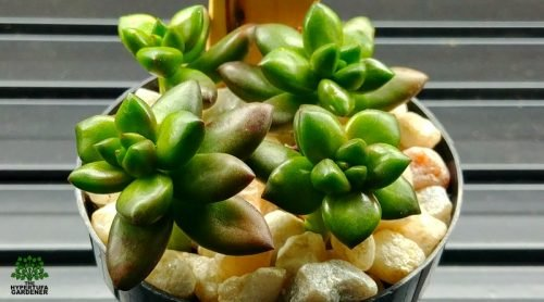 Just How Easy Is It To Propagate Succulents? It's This Easy!
