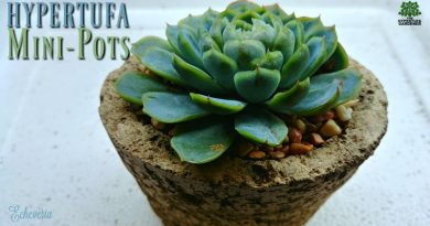 Hypertufa Mini-Pots planted with an Echeveria