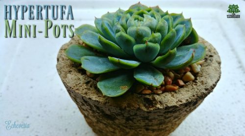 Tiny Succulent Plants Call For Hypertufa Mini-Pots