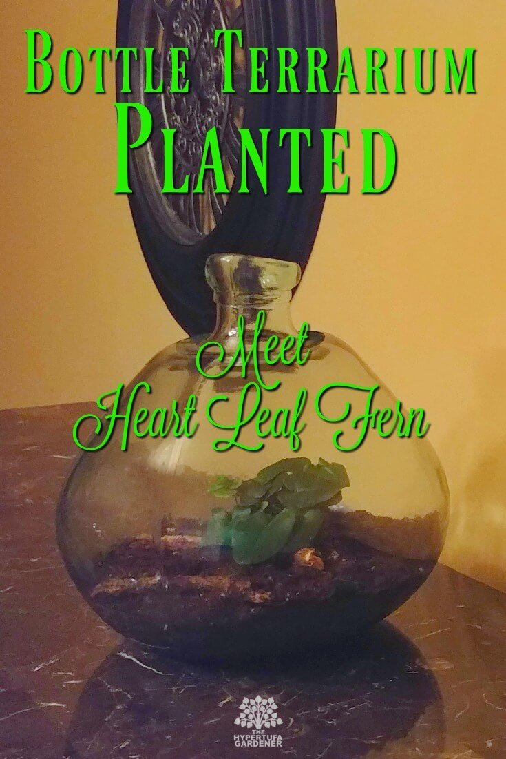 Bottle Terrarium Planted - Meet Heart Leaf Fern