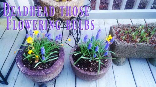 Garden Chores – A Gardener's Work Is Never Done!