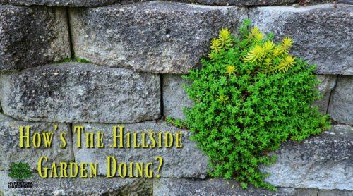 Spring Update & Tour for Hillside Boulder Garden – One Year Later