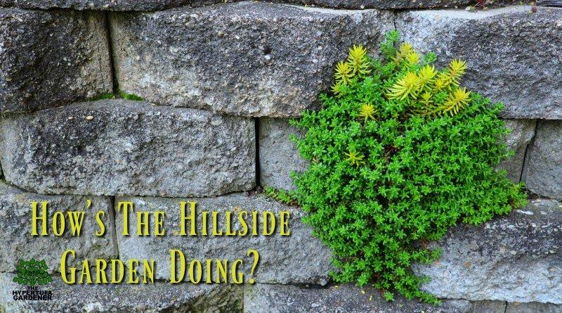 Hillside Boulder Garden retaining wall