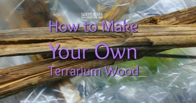 How to make your own terrarium wood at home
