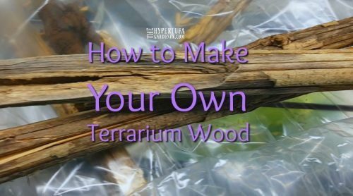 Can I Make Some Terrarium Wood? How To Do This Yourself