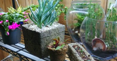 Let's bring hypertufa indoors. I am using hypertufa for houseplants. Looks great!